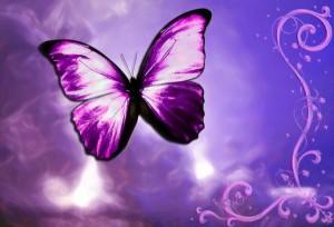 butterfly-violet